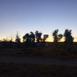 Cottonwoods at sunset