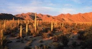 South Maricopa Mountains Wilderness Area
