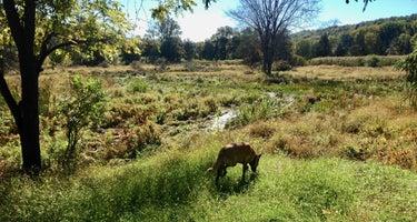 Clove Mountain Meadow