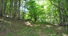 Camp Cider Fort