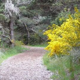 Beautiful walking trail