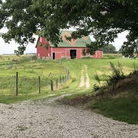 path to the big barn (bicentennial barn)