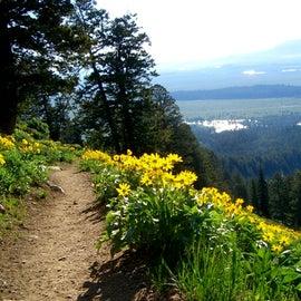 Flowers blooming! Great hike!