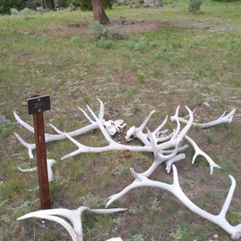 Antlers and the site sign welcome you to camp