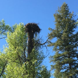 Cool osprey (?) nest not far from the campground. The raptor flew over me several times while I hiked, maybe chicks in the nest?