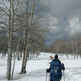 Snowshoeing through the aspens on our way to Colton Guard Station.