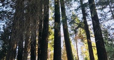Ten Mile Campground (ca)