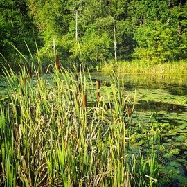 Shotwell Pond.