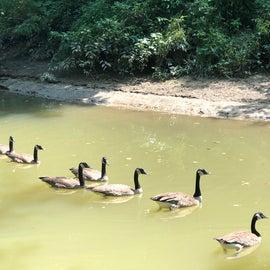 Got my ducks in a row. lol