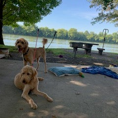 Our dogs by the water with concrete tables and chairs