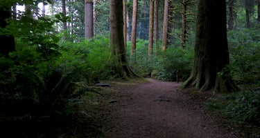 Nehalem Falls - State Forestry