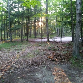 Photo of wooded tent site from road within campground.