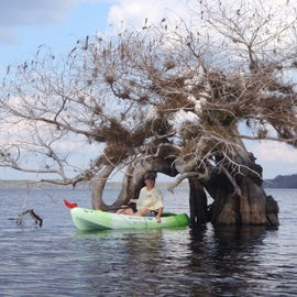 Tree formation you can paddle through.