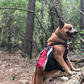 Dakota loves the hiking trails here. She's short enough to miss the spider webs :)