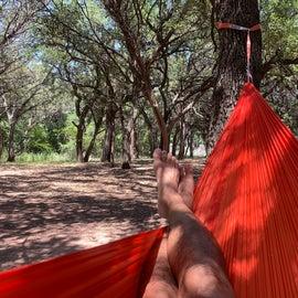 Plenty of trees to hang a hammock