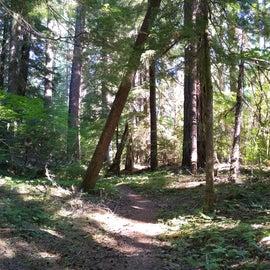 Trail alone Rogue River