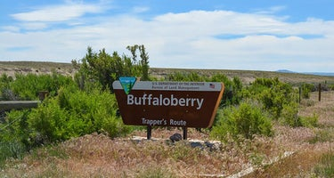 Buffaloberry Campground