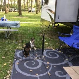 Dog friendly campground