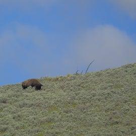 Beautiful views and wildlife around this campground.