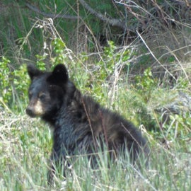 Tower is a prime area for bear spotting. We were not disappointed.