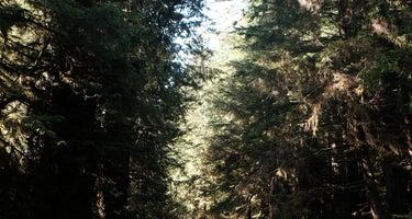 Jones Valley Inlet Shoreline Campground