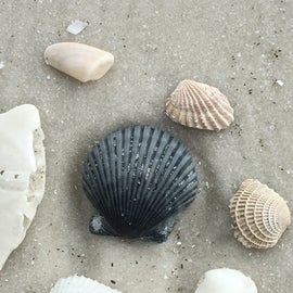 Going to the beach and collecting shells is so much fun when you're here.