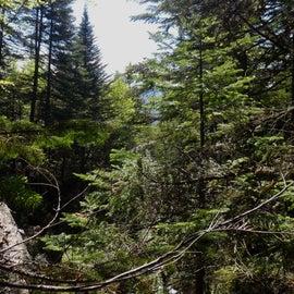 trails around campsite