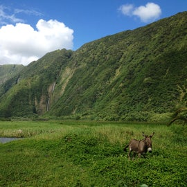 Waimanu Valley on the most gorgeous sunny day!