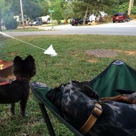 Yogi Bear camp, right up the road