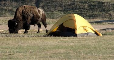Sage Creek Campground