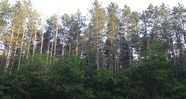 Pinewoods Campground