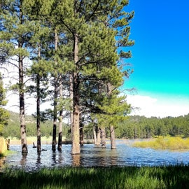 A little extra water in the reservoir=cool tree scenery