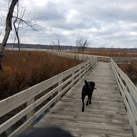 There is a hiking trail that leaves from the campground.  It starts off as a boardwalk over the marsh and transitions into a primitive trail.