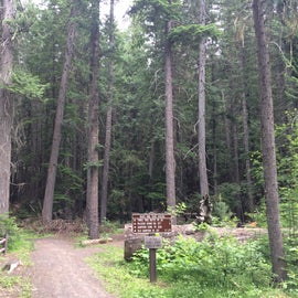 A network of trails taking off from campground.  it was like a cathedral filled with bird songs.