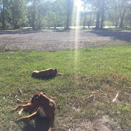 Dogs soaking up some sun. Across from them are some sites along water.