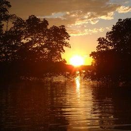 Sunset through the mangroves
