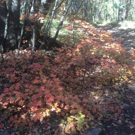 Leaves starting to turn on the path