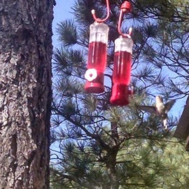 Lots of Hummingbirds