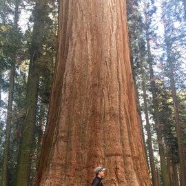 The giant sequoias!
