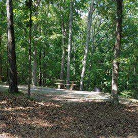 Wooded campsite.