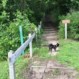 Walk in primitive sites