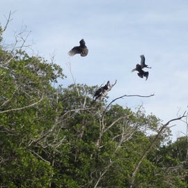 Vultures...maybe we looked appetizing