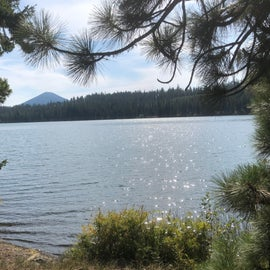 Black Butte through the Ponderosas from the northern shore on the loop trail.