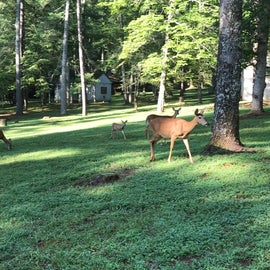 Lots of deer at this park!