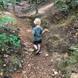 Searching for Fairy Stones!