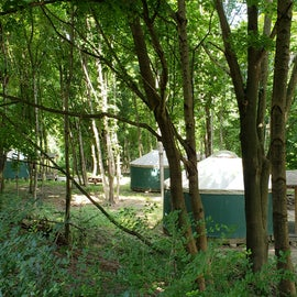 Yurts 7-12 are in the woods