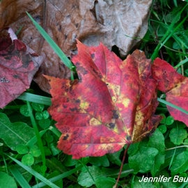 A few fall leaves in September, but peak will be in October.
