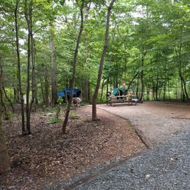 Site 57, nice and secluded on a small loop. Lots of trees for hammocking