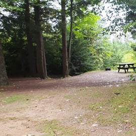 Site 2; the brighter/open area toward the back overlooks the pond