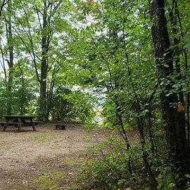 Site 7, pondside